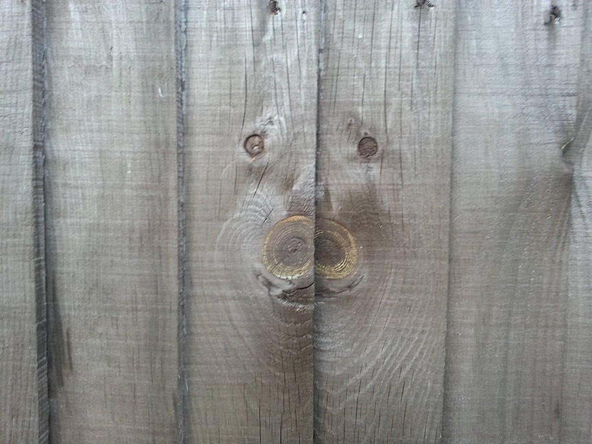 pig face in wood