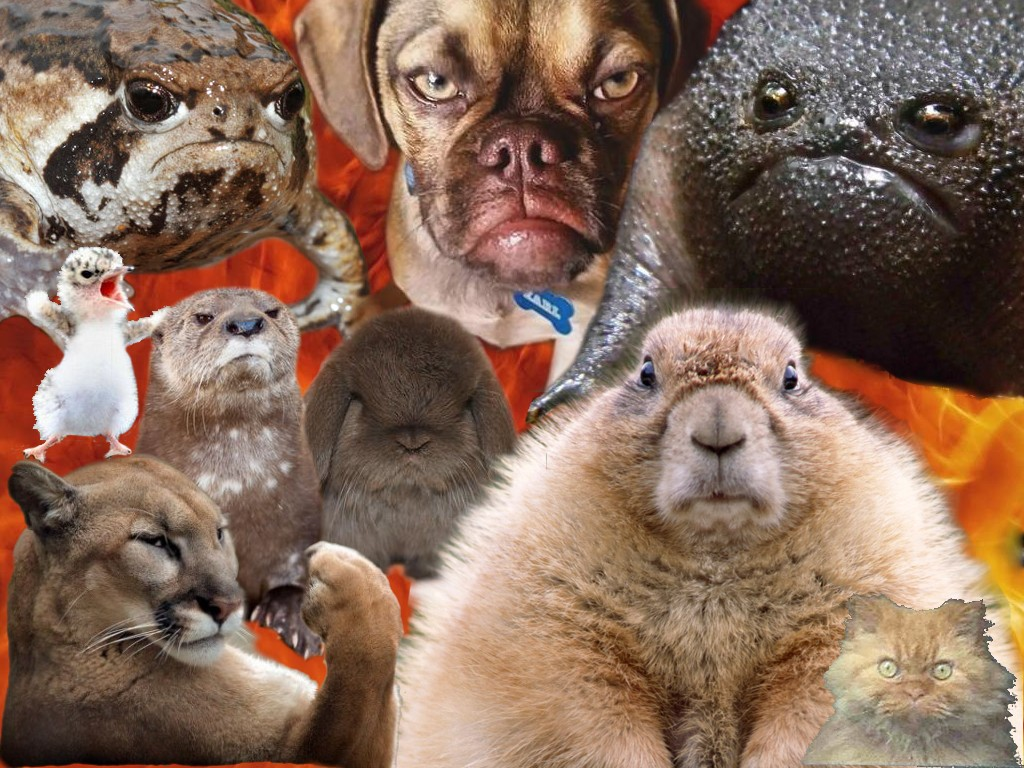 assortment of animals with angry faces