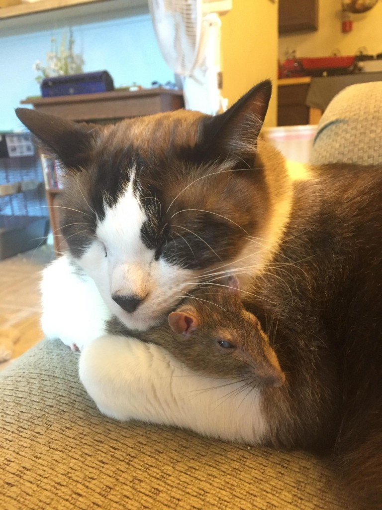 cat and mouse sleeping together