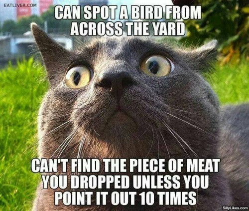 cat that can't find food meme