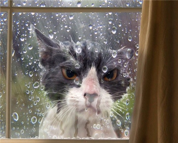 Cat stuck out in the rain