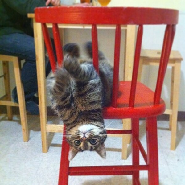 cat hanging outside chair upside down