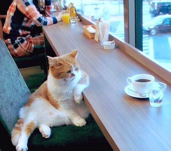 cat sitting at table with coffee