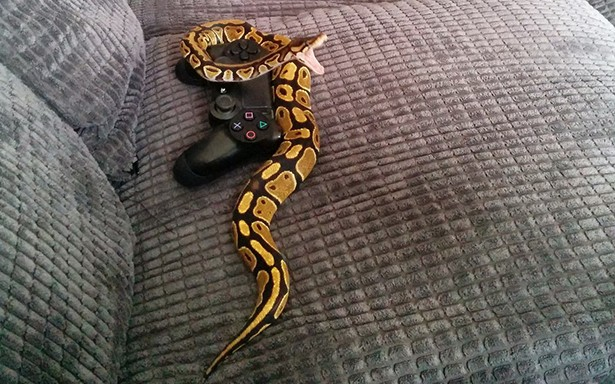 snake wrapped around video game controller