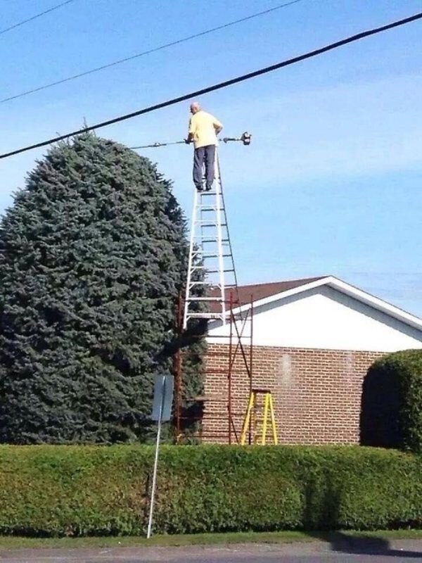 guy trimming bushes unsafely from ladder