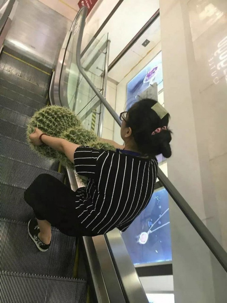 going down escalator with big cactus